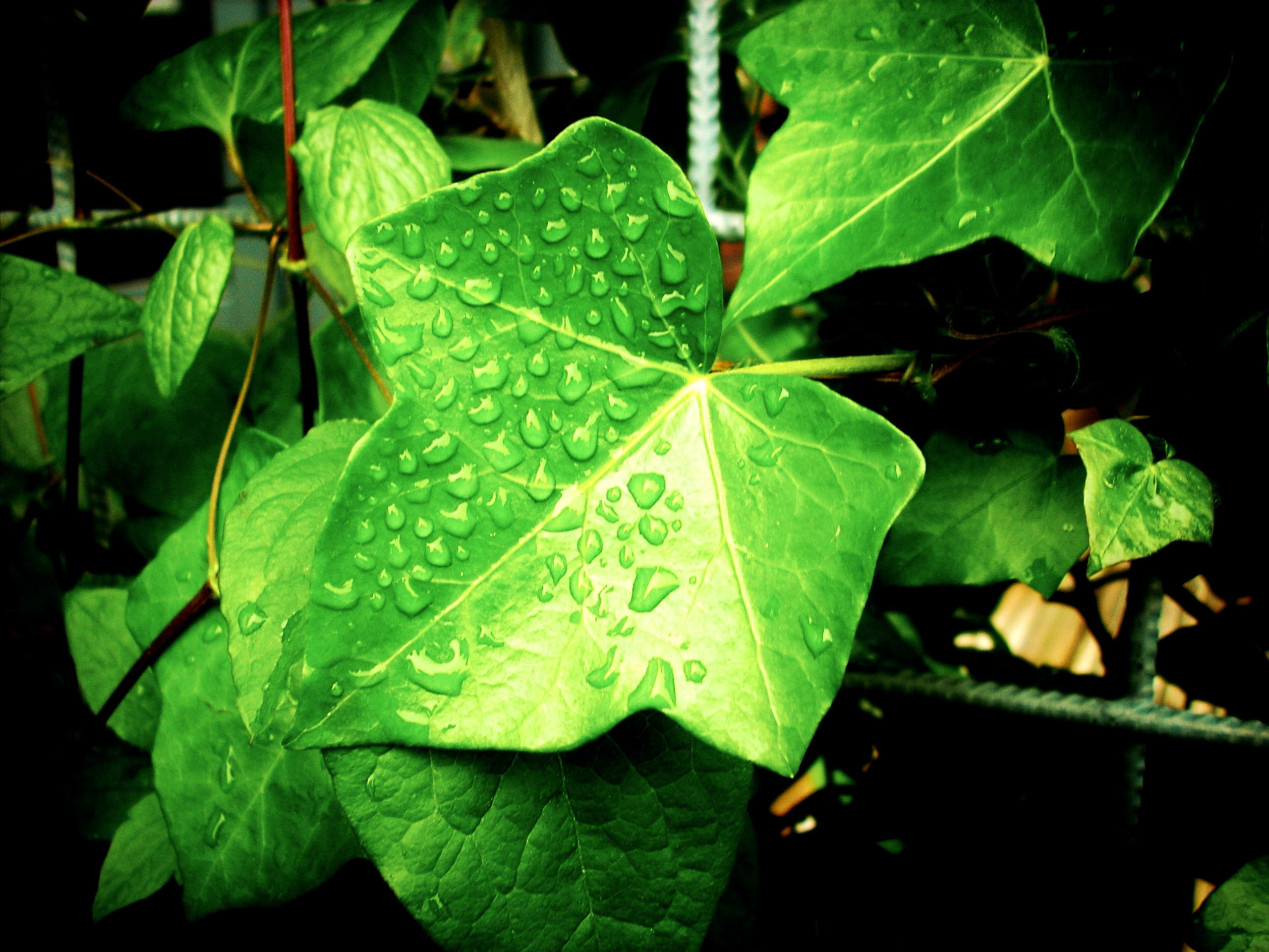 Macro Photography of Green Leaves