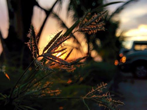 Бесплатное стоковое фото с закат, природа, телефон фото