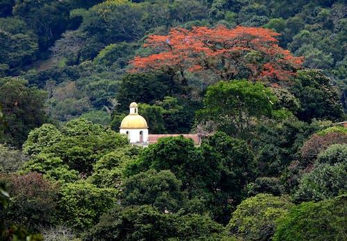 Foto profissional grátis de árvores florestais, paisagens, panoramas