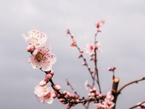 primavera的, 冬季, 分公司 的 免費圖庫相片