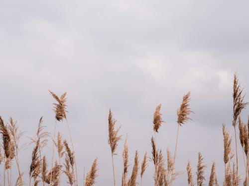 冬季, 夏天, 夏季 的 免費圖庫相片