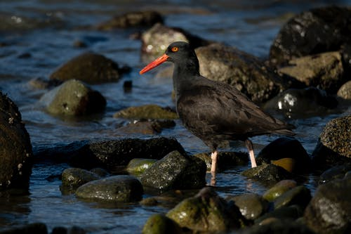 Black Bird on Rocky Shore