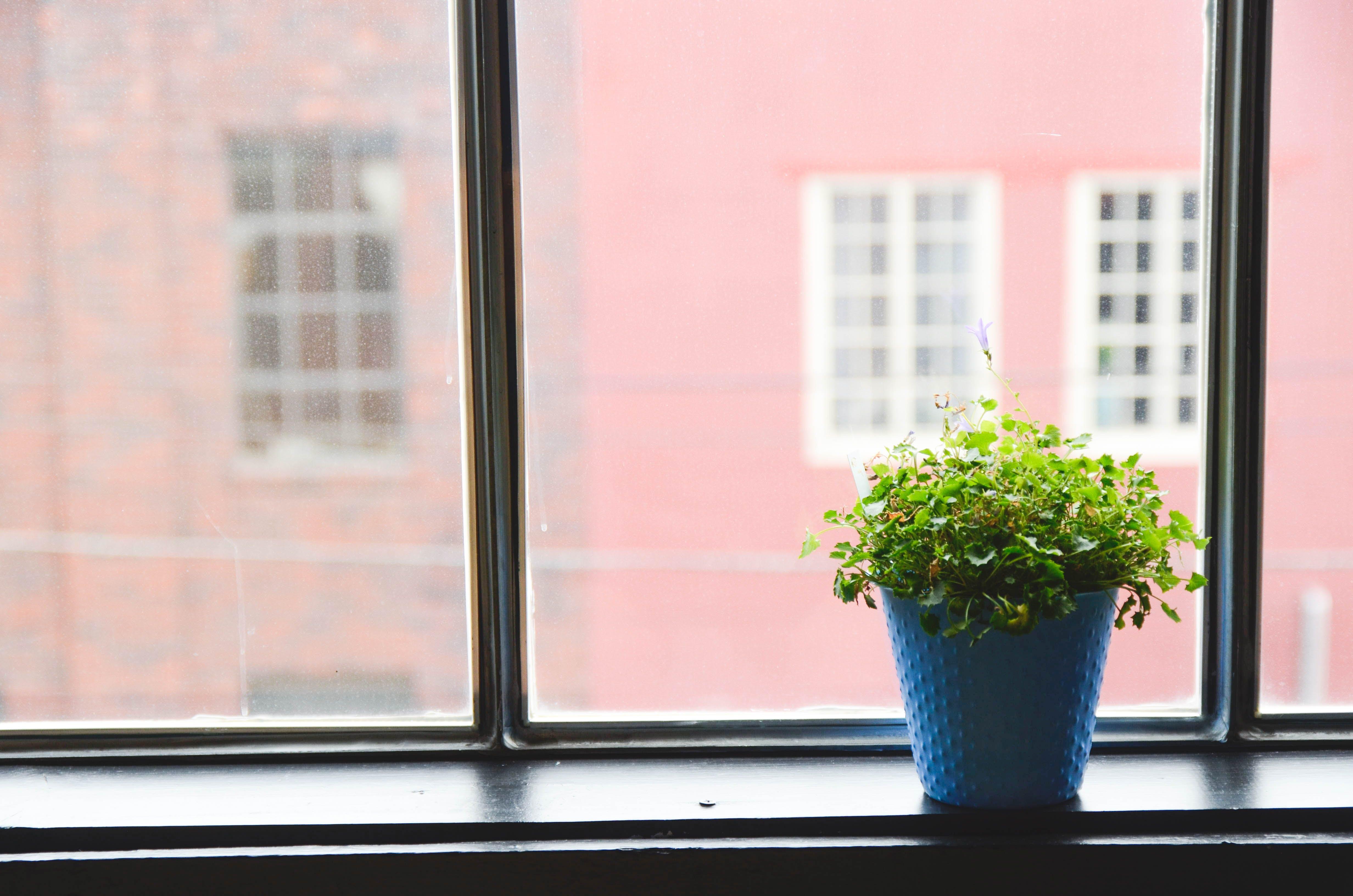 Free stock photo of windows