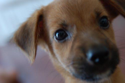 คลังภาพถ่ายฟรี ของ การถ่ายภาพสัตว์, สุนัข, หมา