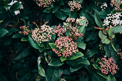 Free stock photo of colourful, flowers, tres