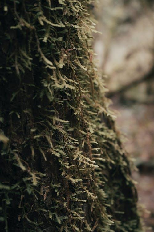 以植物為主, 俄勒岡州, 倒下的樹 的 免費圖庫相片