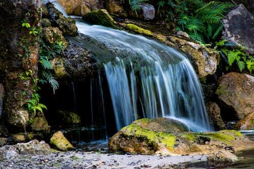 Photos gratuites de automne, bois, caillou