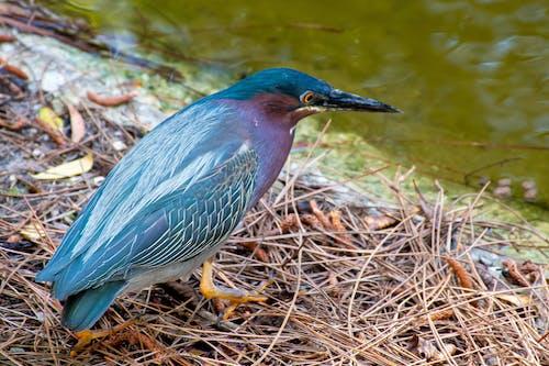 Photos gratuites de animal, aviaire, bassin