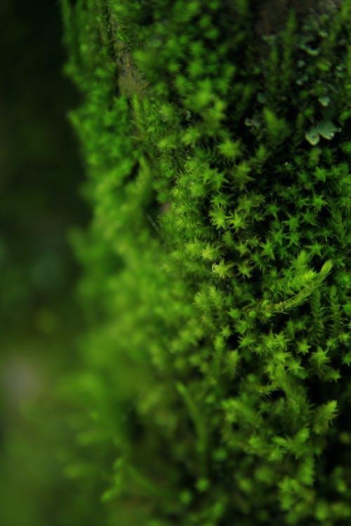 คลังภาพถ่ายฟรี ของ ดวงดาว, ดาวสีเขียว, ธรรมชาติ, พืช