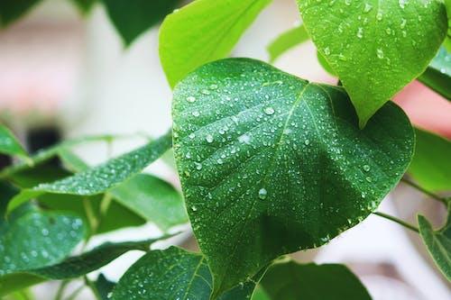 Foto d'estoc gratuïta de aigua, arbre, bonic, gotes
