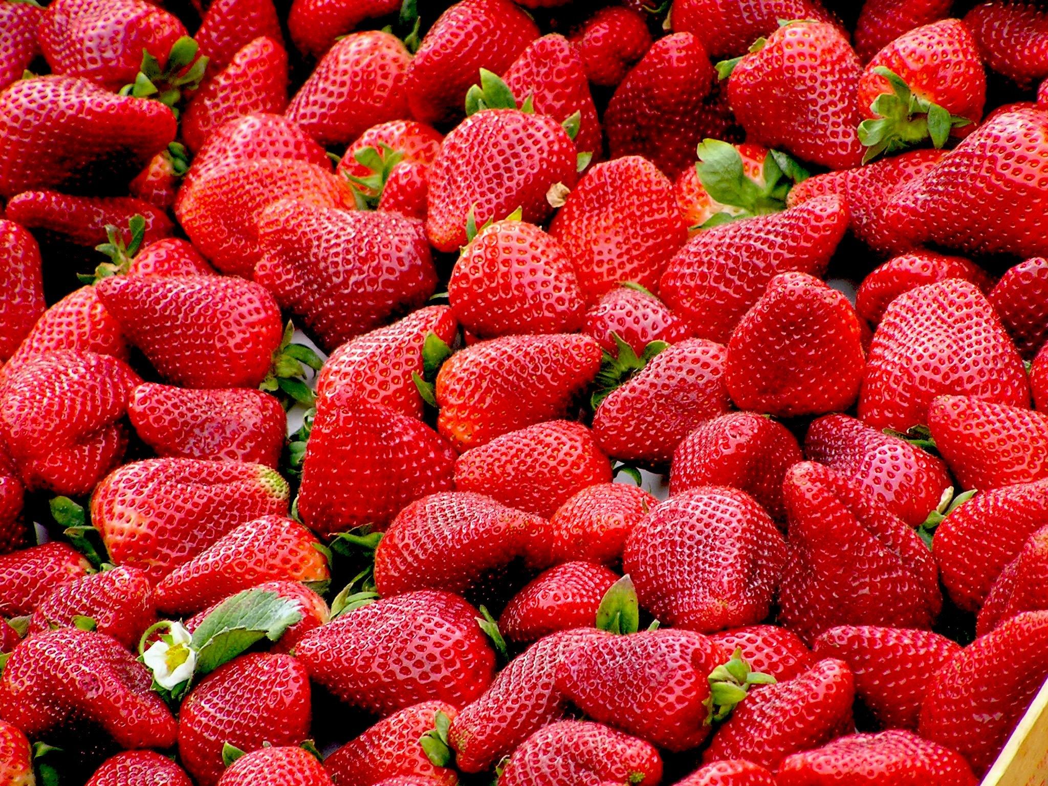 1000 Interesting Fruits Photos 183 Pexels 183 Free Stock Photos