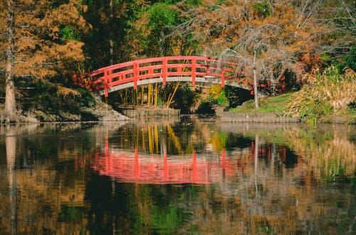 Fotos de stock gratuitas de agua, arboles, bosque, escénico