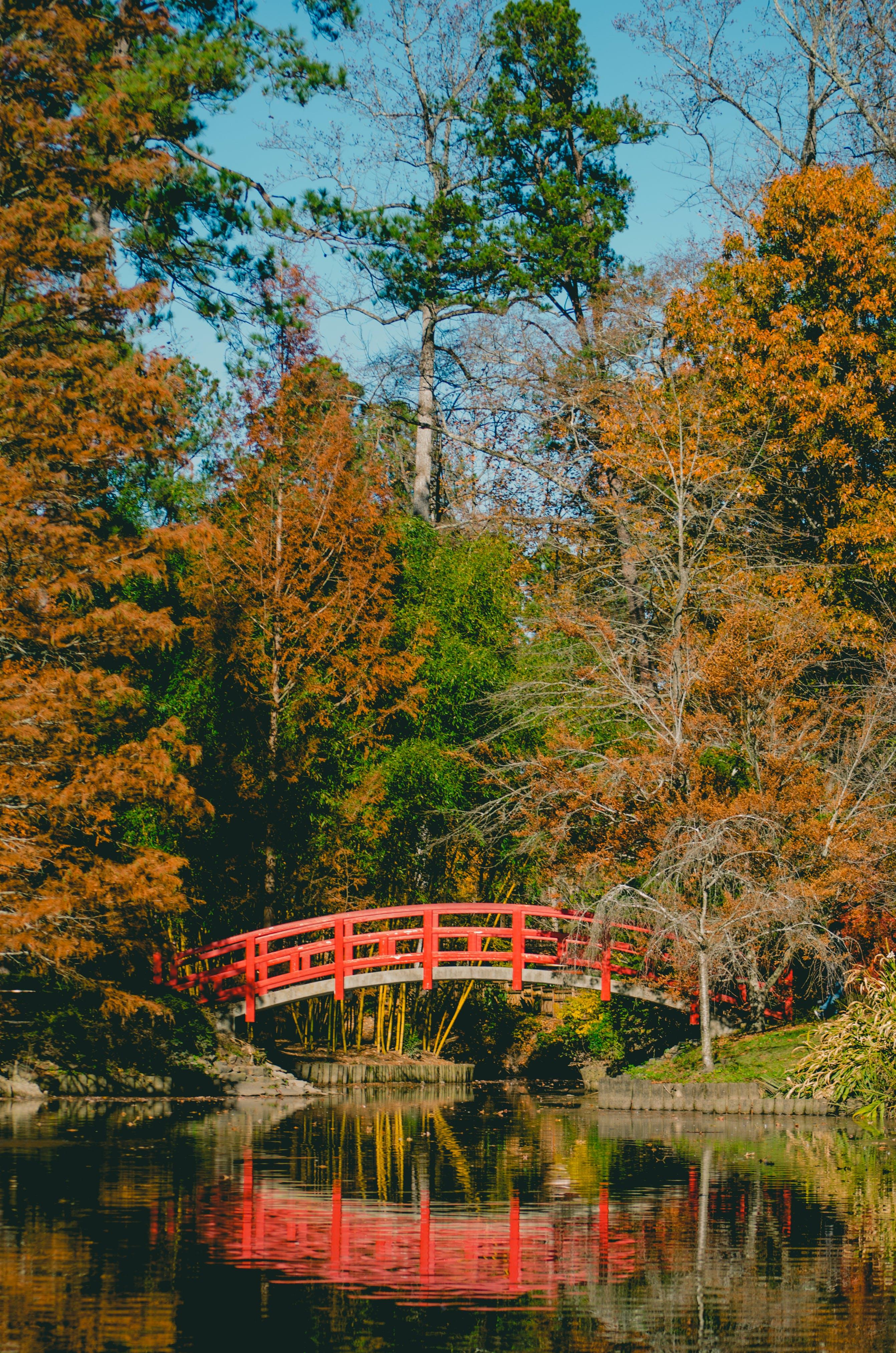 カラフル, パーク, ブリッジ, 庭園の無料の写真素材