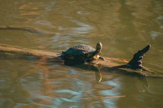 Brown Turtle on Wood Trunk