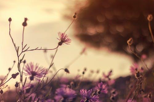 Kostnadsfri bild av anläggning, blommande växt, blommor, blomning