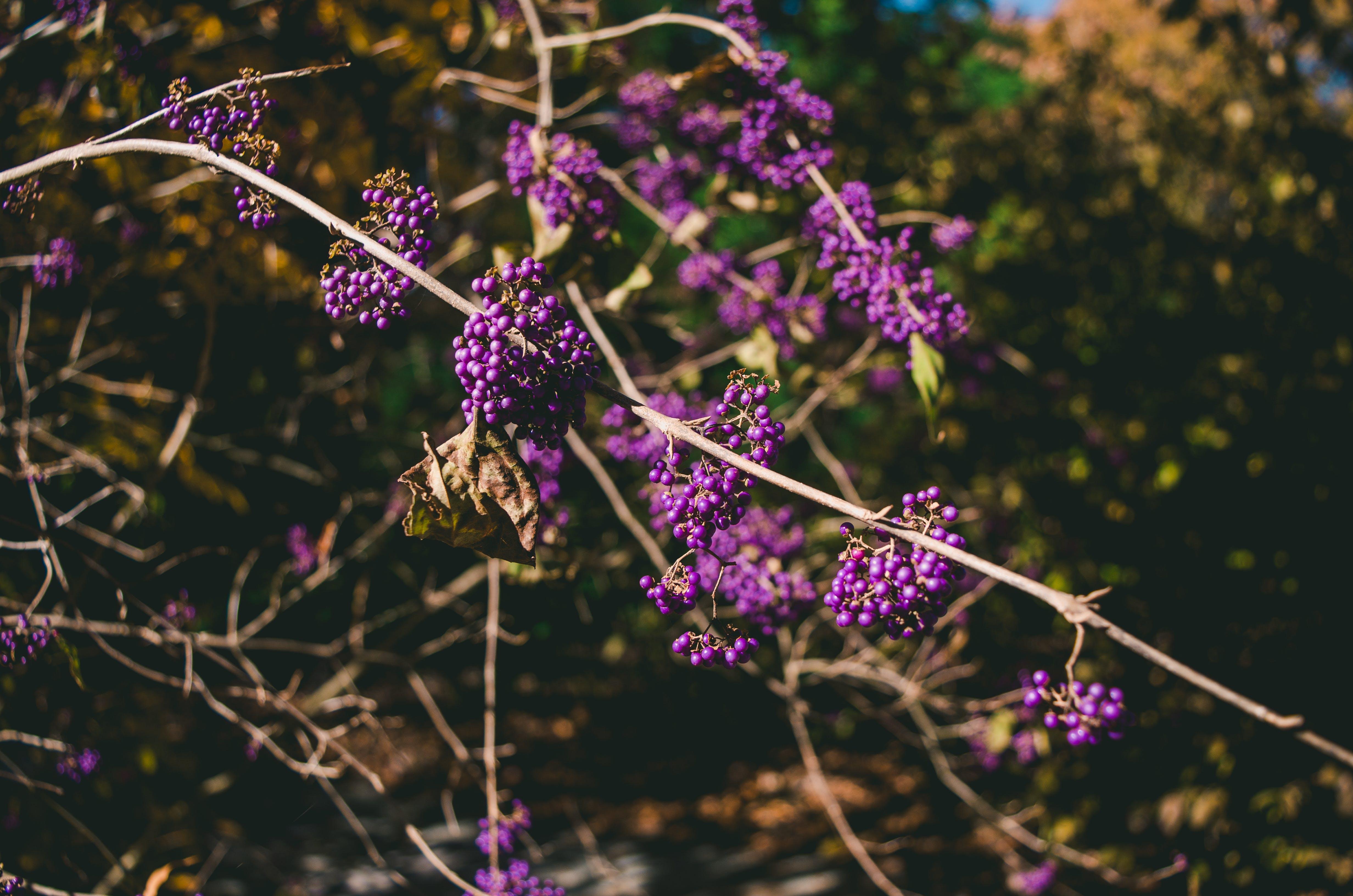 Kostenloses Stock Foto zu ast, blumen, blüte, farben