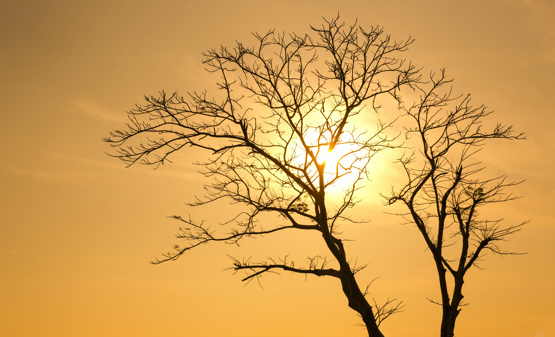 Foto stok gratis alam, backlit, cabang, kuning