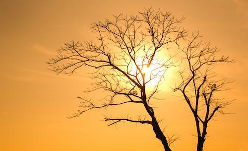 Foto stok gratis alam, backlit, bayangan hitam, cabang