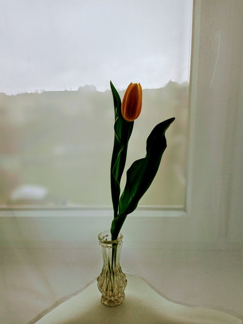 Blooming tulip with tender bud in decorative vase on windowsill