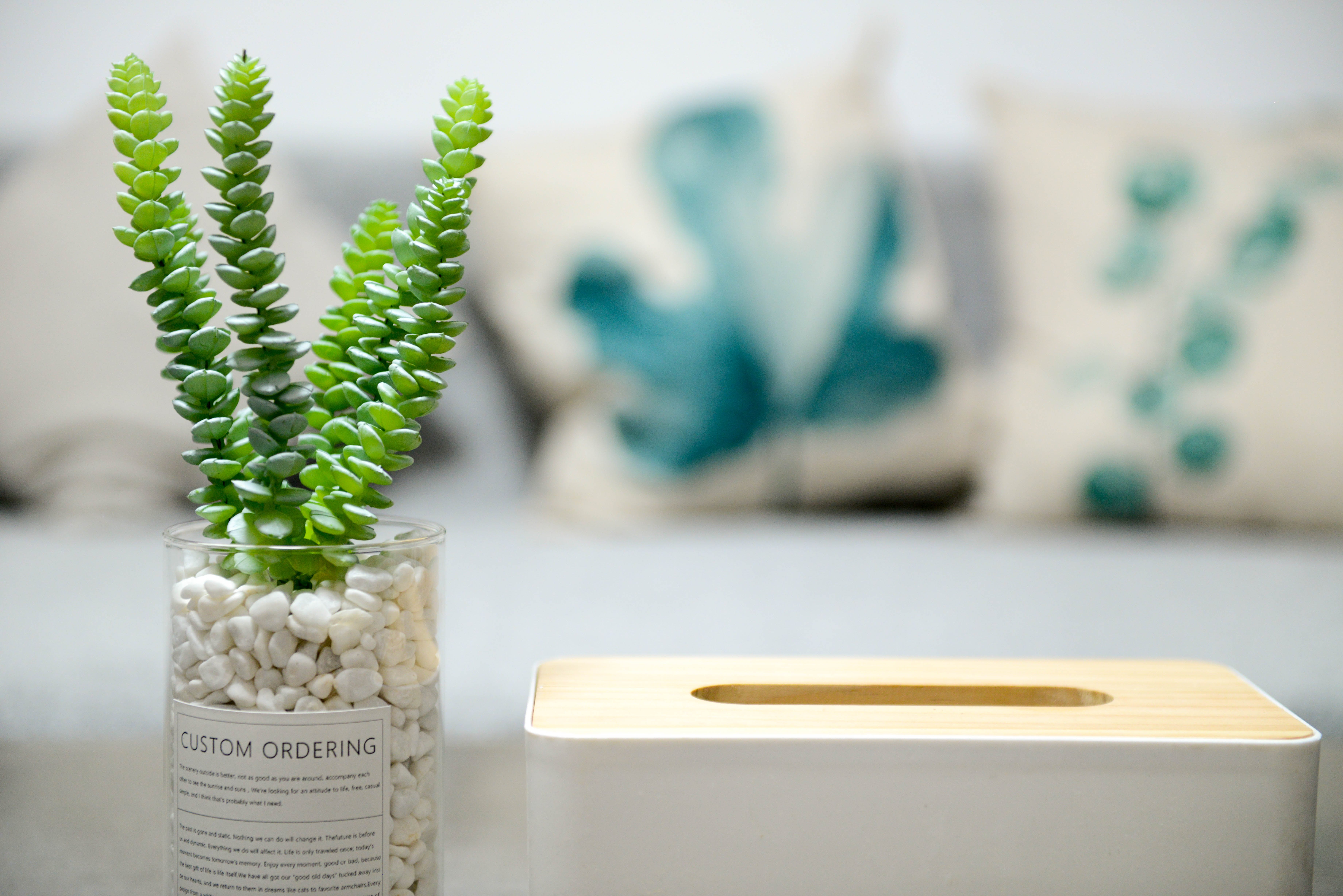 Selective Photo of Green Succulent Plant