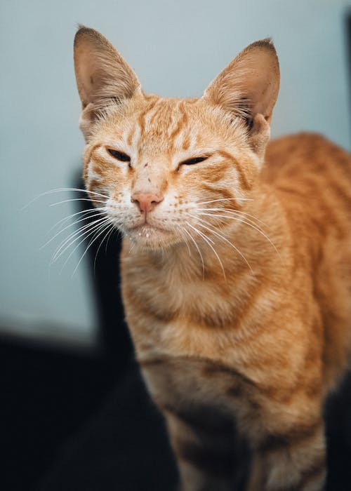 Free stock photo of cats, wild, wiskers