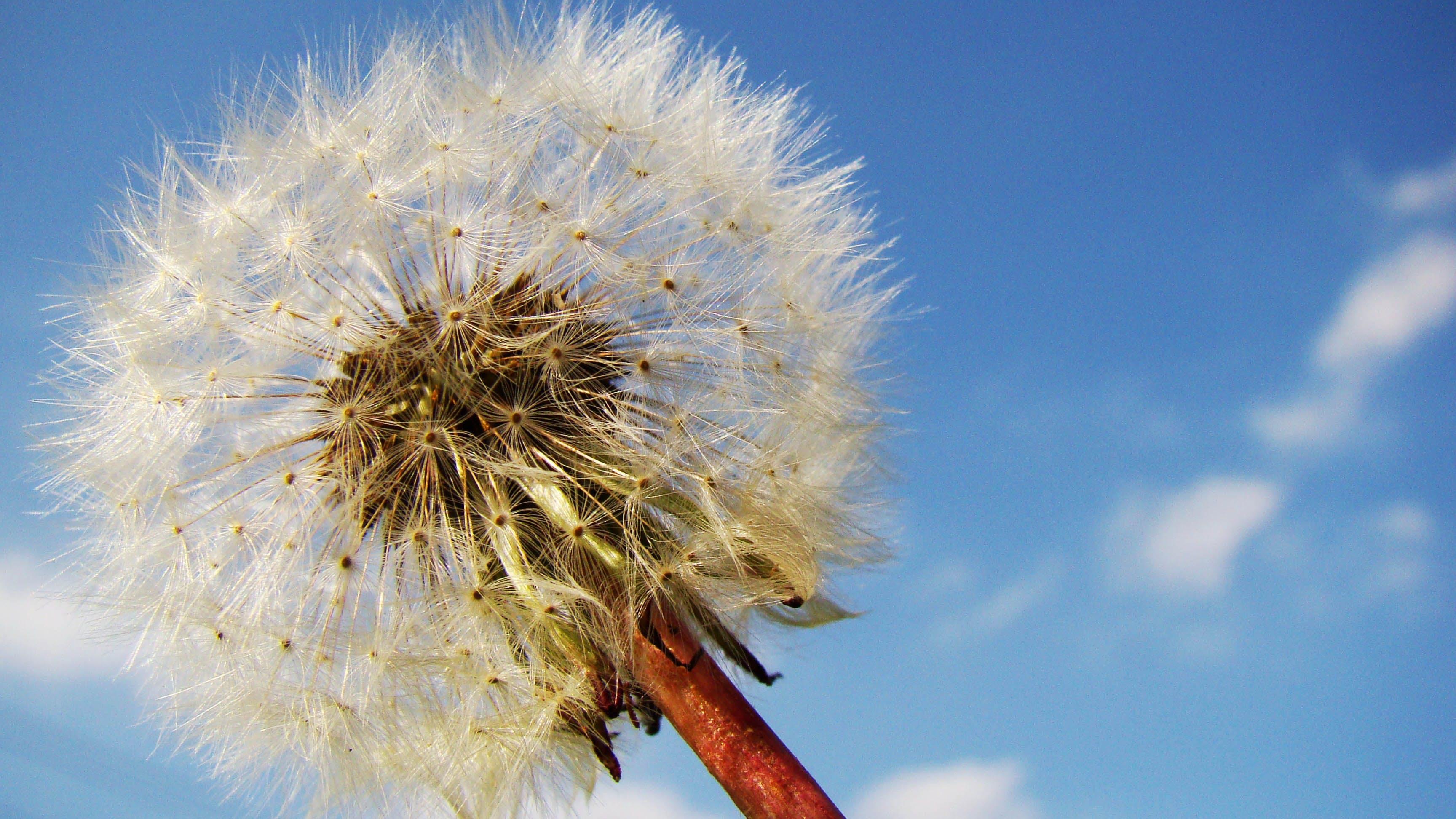 White Blow Flower Under Sunny Blue Skies