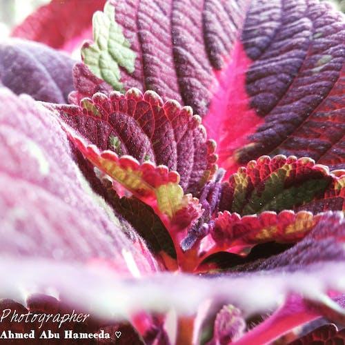 Free stock photo of nice, photo, plant