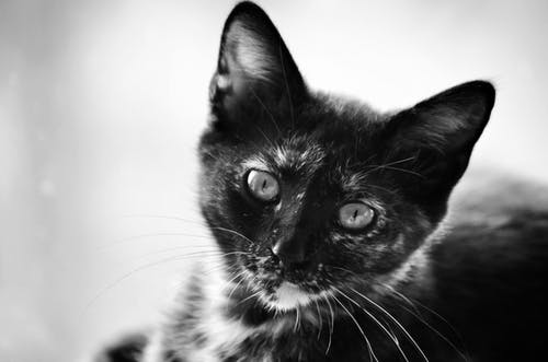 Gratis stockfoto met beesten, dieren, dierenfotografie, kat