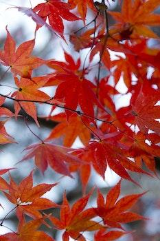 Brown Leaf in Tilt Shift Photograph