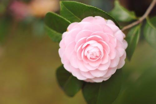 Imagine de stoc gratuită din flori frumoase