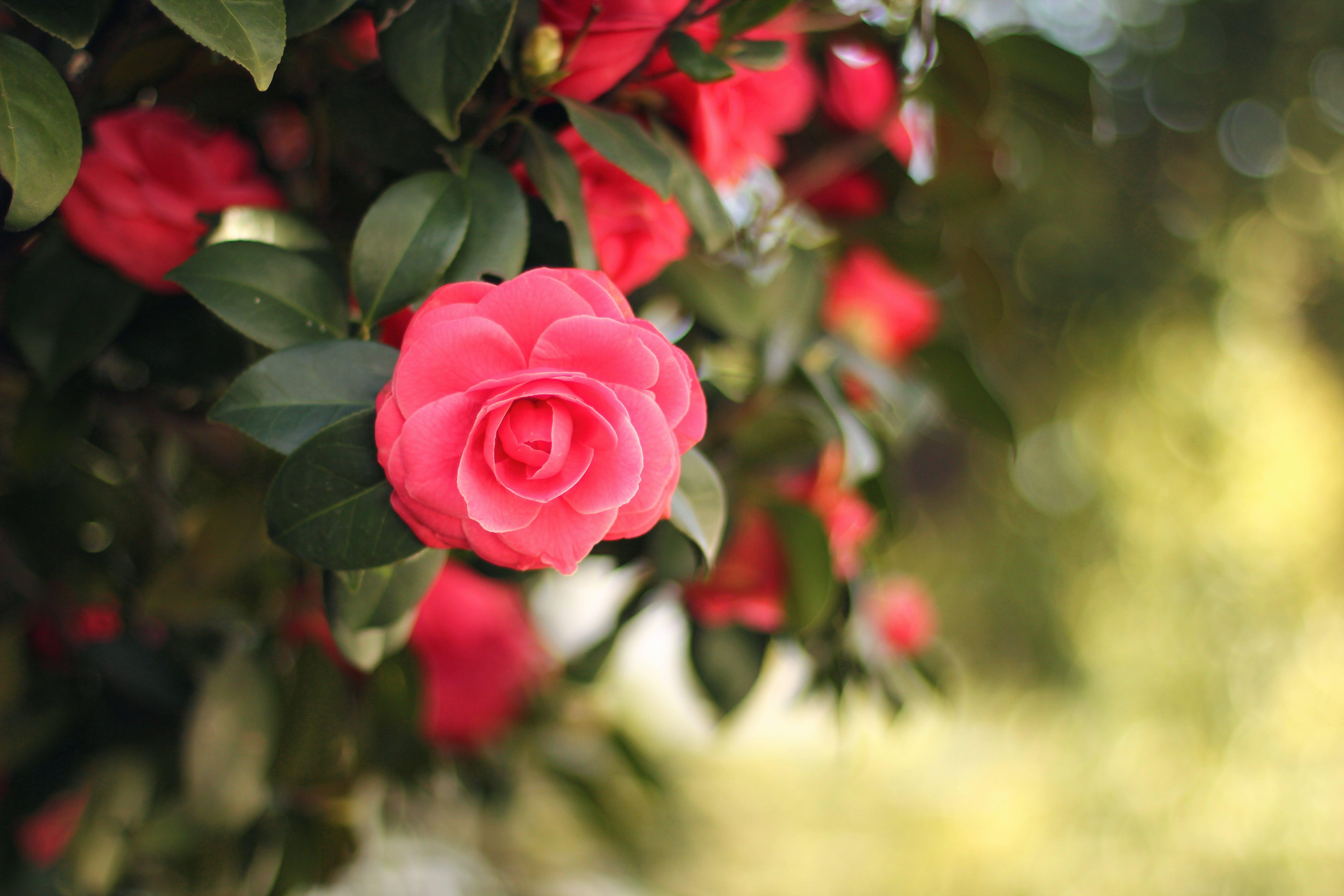 專注, 微妙, 景深, 植物群 的 免费素材照片