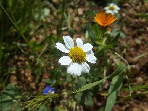 Free stock photo of flowers, nature wallpaper, nice
