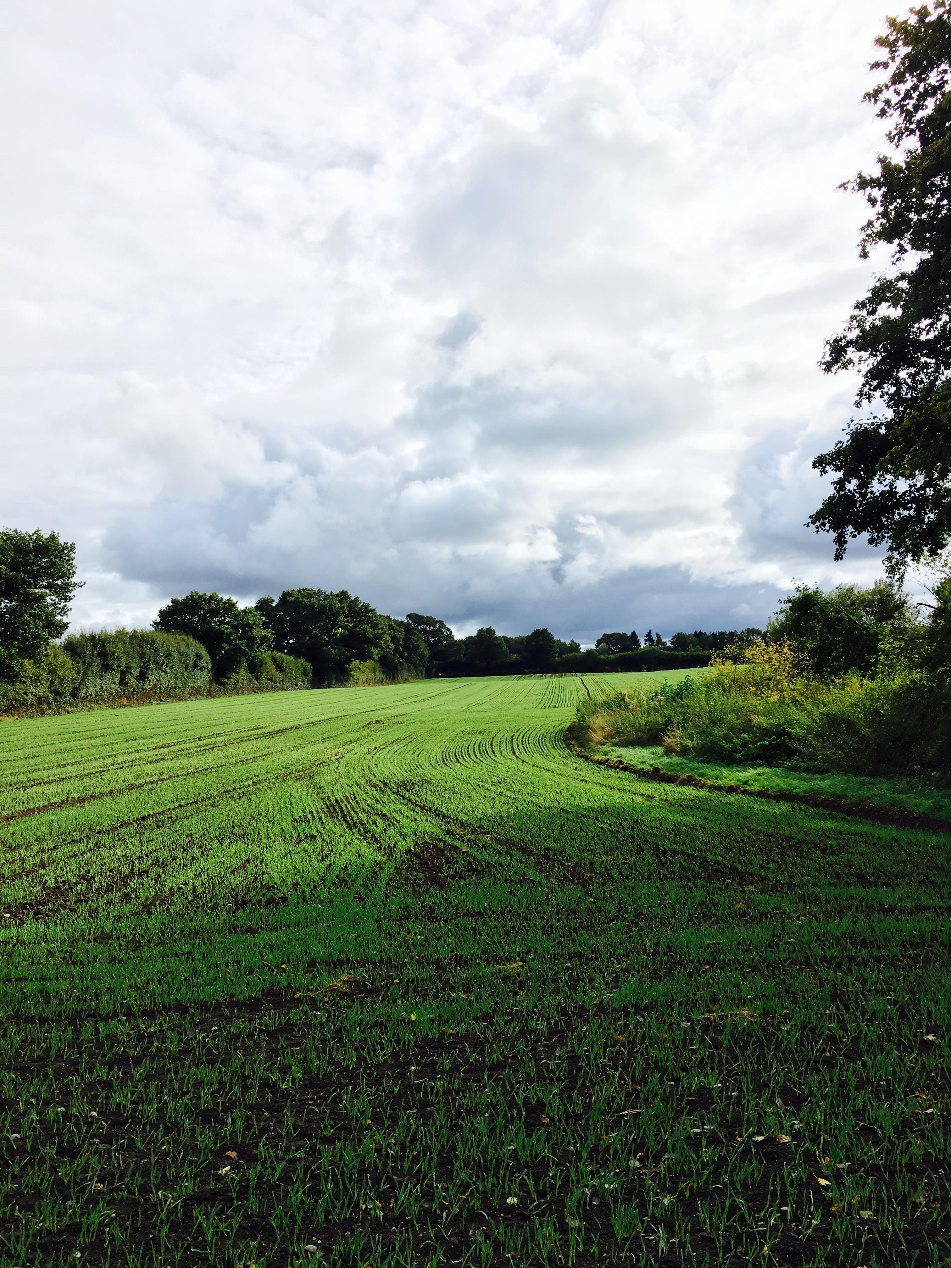 Gratis stockfoto met akkerland, bodem, boerderij, bomen