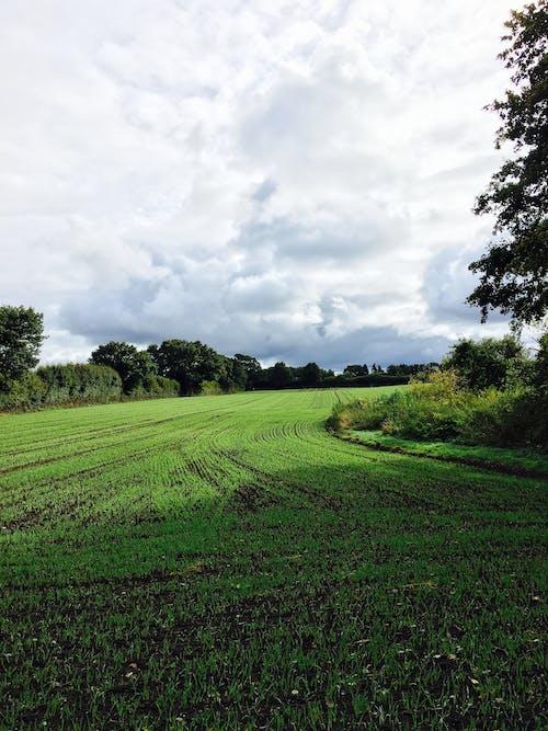 구름, 나무, 농업, 농장의 무료 스톡 사진