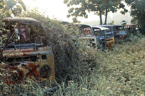 Free stock photo of abandoned, abandoned cars, car wrecks