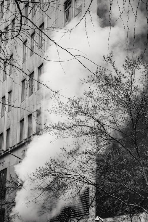 Kostnadsfri bild av arkitektur, bladlösa, bw