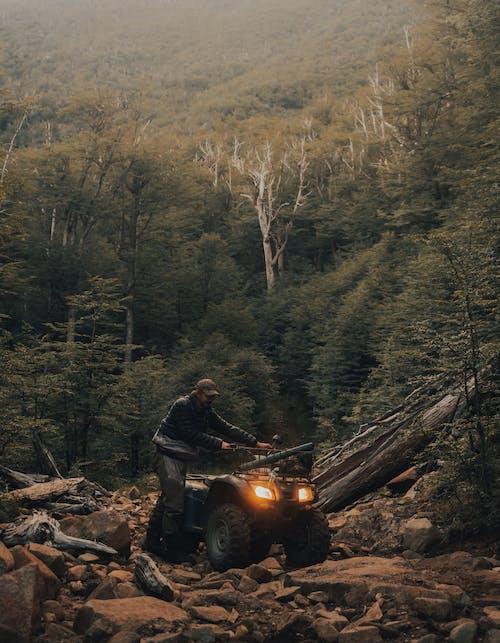 Безкоштовне стокове фото на тему «відпочинок, дерев'яна колода, Деревина»
