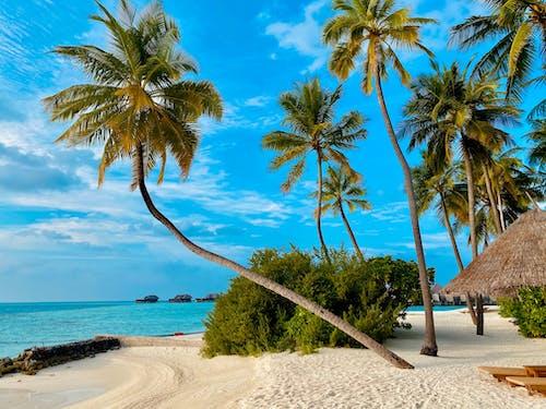 Free stock photo of beach, blue ocean, blue skies