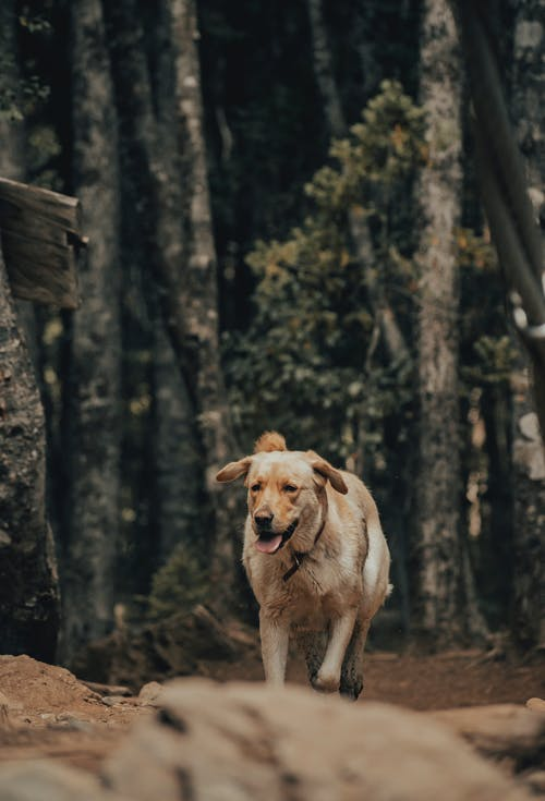 Безкоштовне стокове фото на тему «Деревина, дерево, дика природа»