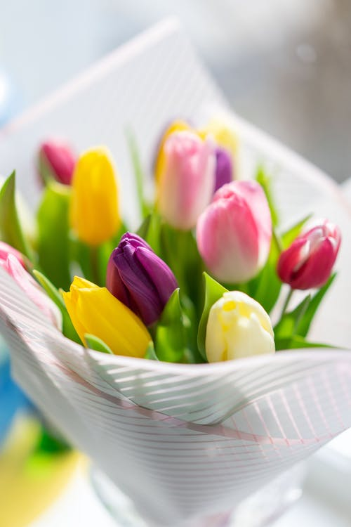 From above of bright delicate tulips with colorful petals and fresh green leaves