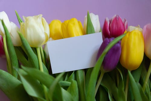 Many bright tulips with delicate petals and blank card