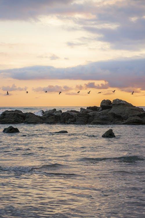 Boulders in ocean under flying birds at sunset