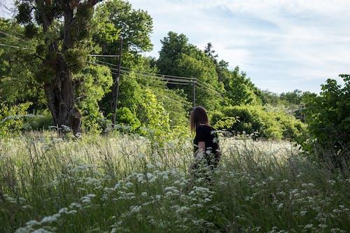 Ingyenes stockfotó anyatermészet, fák, természet, természetfotózás témában
