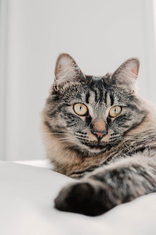 Бесплатное стоковое фото с в помещении, домашнее животное, домашнее животное фотография