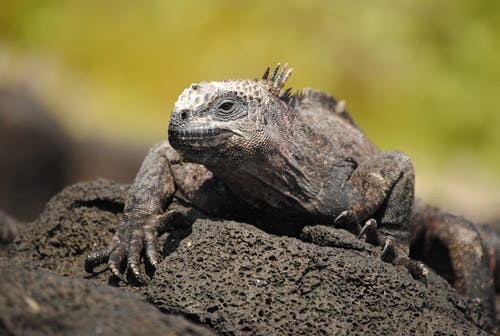 Brown and Gray Bearded Dragon on Brown Soil