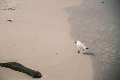 Lonely gull walking along sandy seashore in daylight