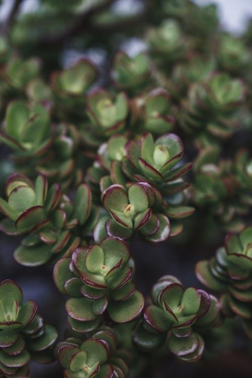 Gratis stockfoto met afgeronde, angiosperms, biologisch