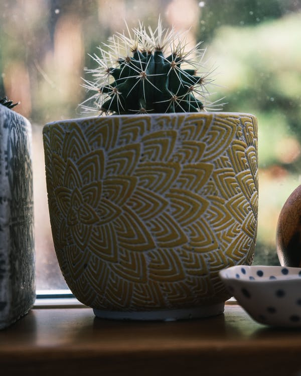 Ornamental pot with prickly cactus on windowsill
