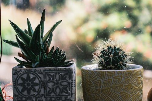 Gratis stockfoto met angiosperms, binnen, binnenshuis