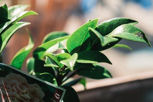 Fresh verdant leaves of plant at home